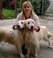 Golden Retriever,Toscana,Pistoia